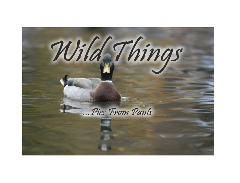 Enter Wild Things Gallery